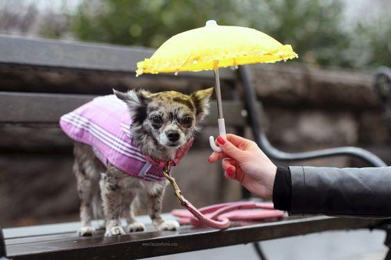 http://blueskyrain.com/wp-content/uploads/2020/03/Dog-rain-coat-BlueSkyRain.jpg